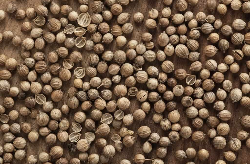 Genesis SK Ltd is a global supplier of Coriander seeds split
