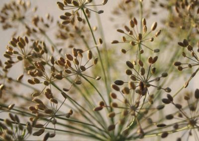 Dill seeds | whole